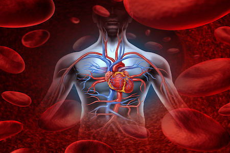 EU-funded project launched to tackle heart attacks